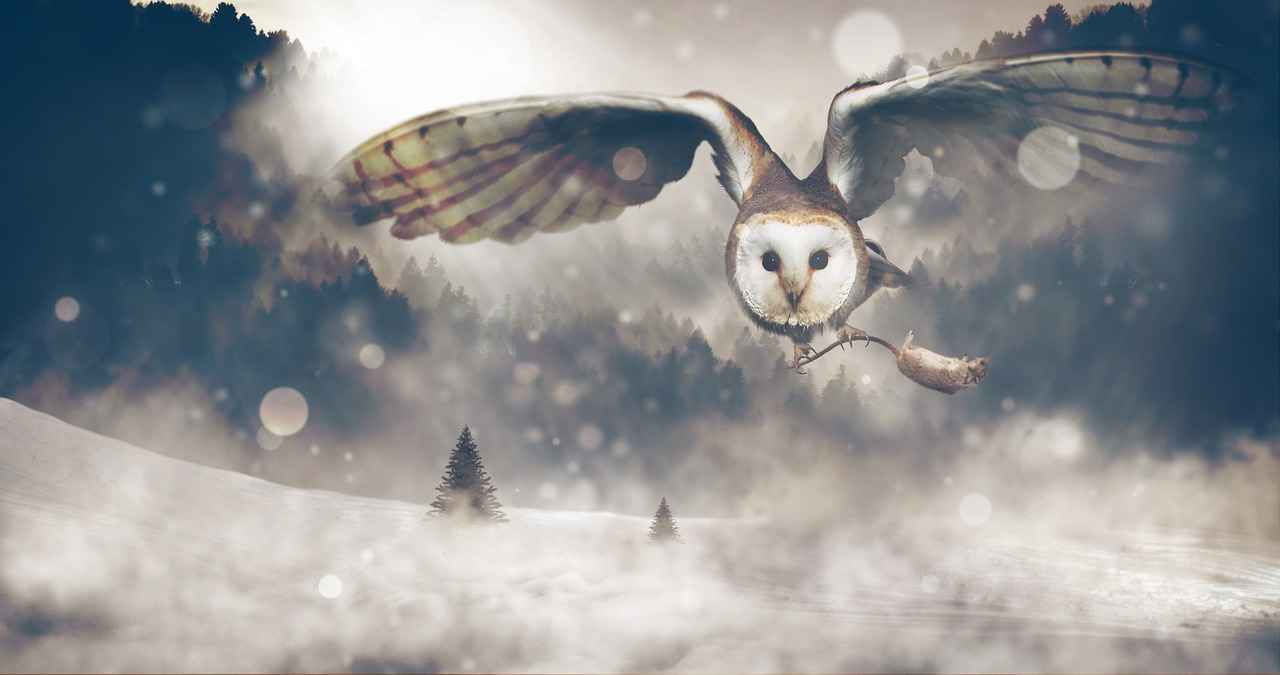 are owls raptors