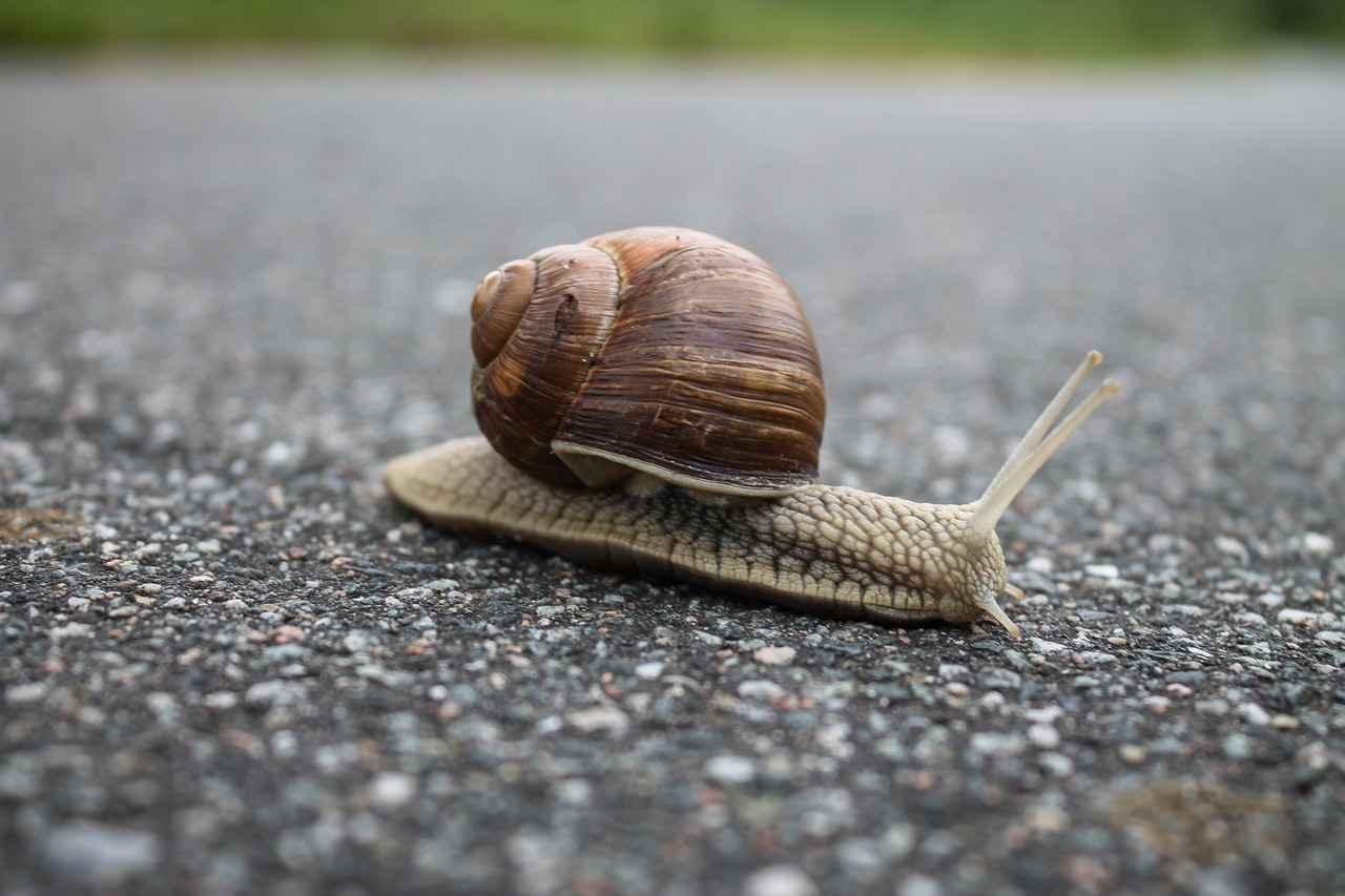 How Do Snails Make Shells