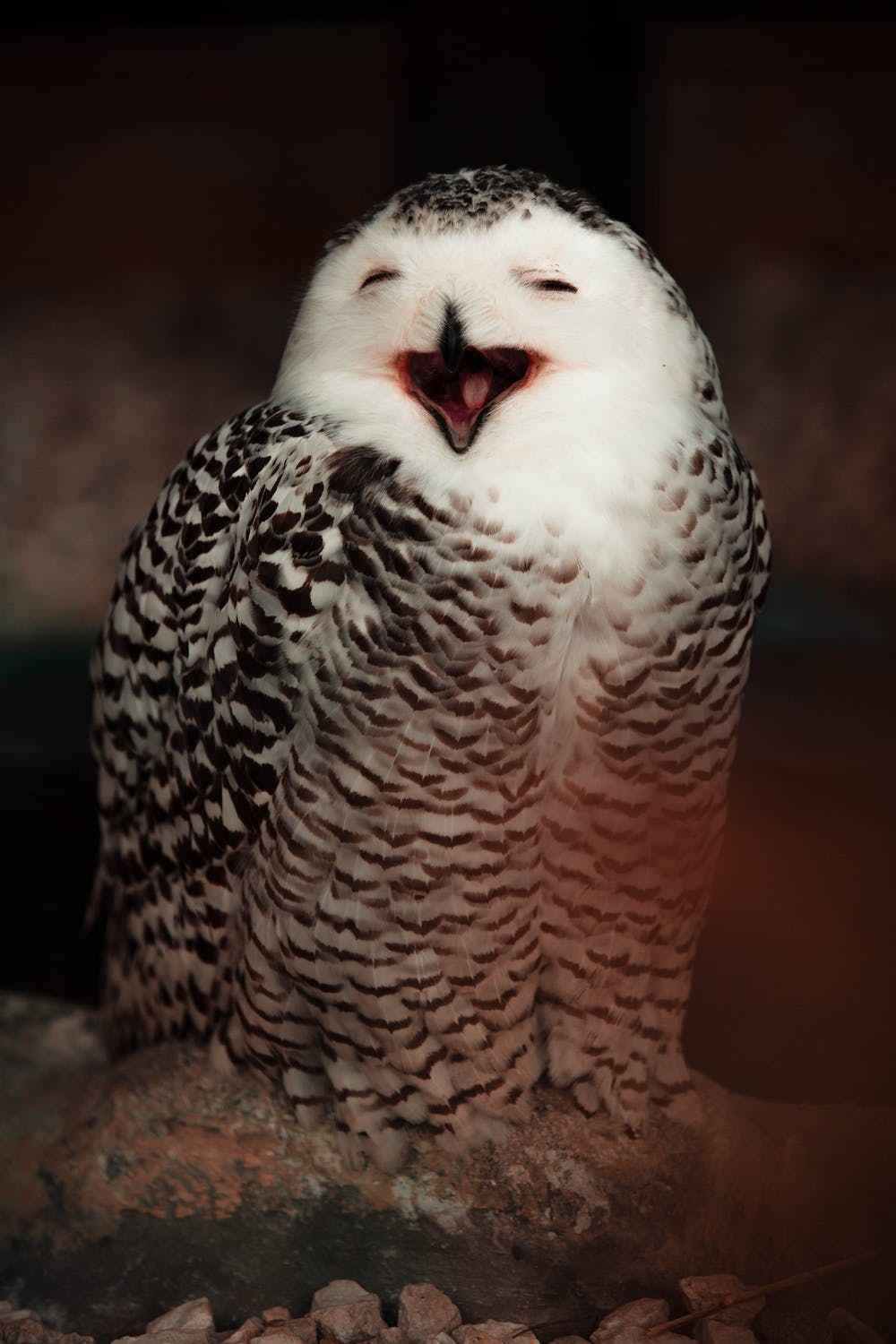 owls that hoot during the day