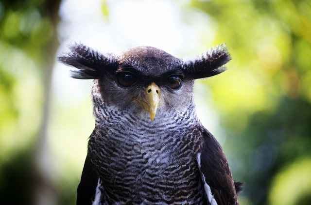 owls can easily see during the day - However they are active mostly at night
