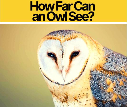 How Far Can an Owl See