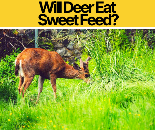 Will Deer Eat Sweet Feed