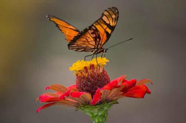 releasing-butterflies