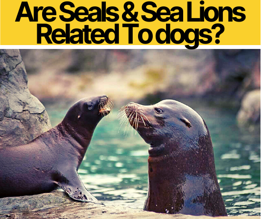 Are Seals & Sea Lions Related To dogs_