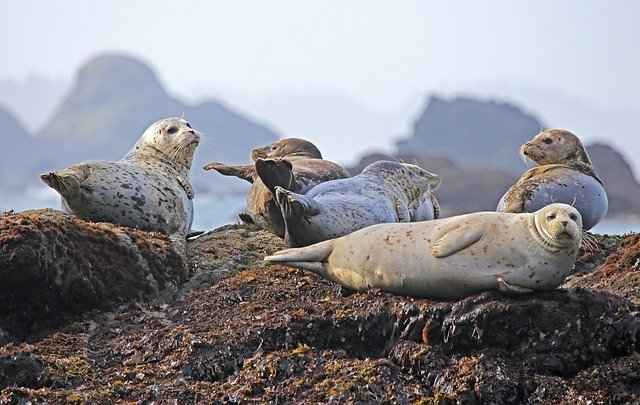 Seals Are not very closely related to dogs, however they are both carnivorous species - So are kinda Related in that sense.