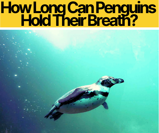 How Long Can Penguins Hold Their Breath