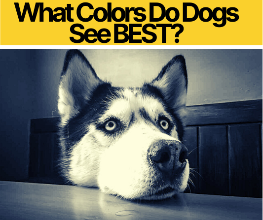 What Colors Do Dogs See BEST_