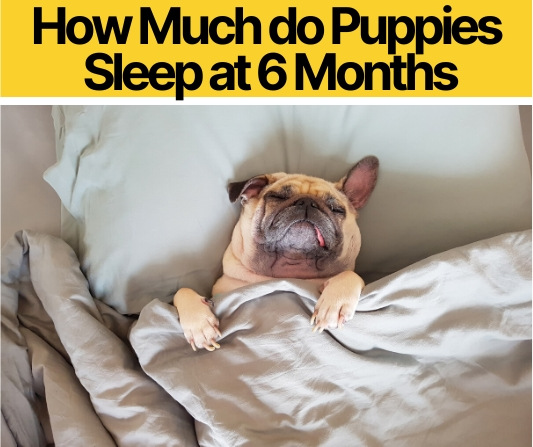 How-Much-do-Puppies-Sleep-at-6-Months